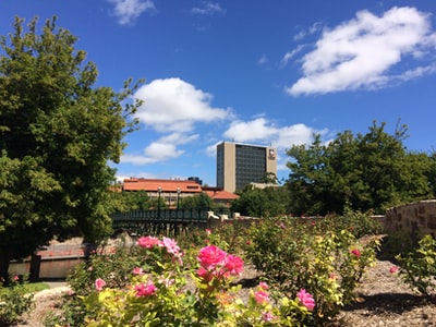 Adelaide green trees and pink flowers near brown building during daytime