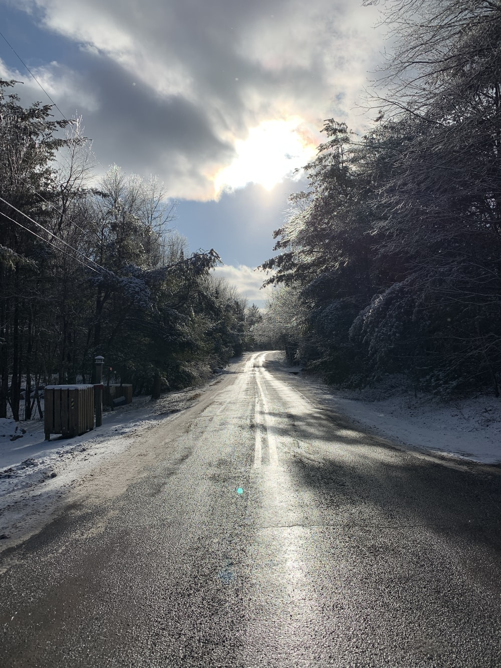 gray road between trees during daytime