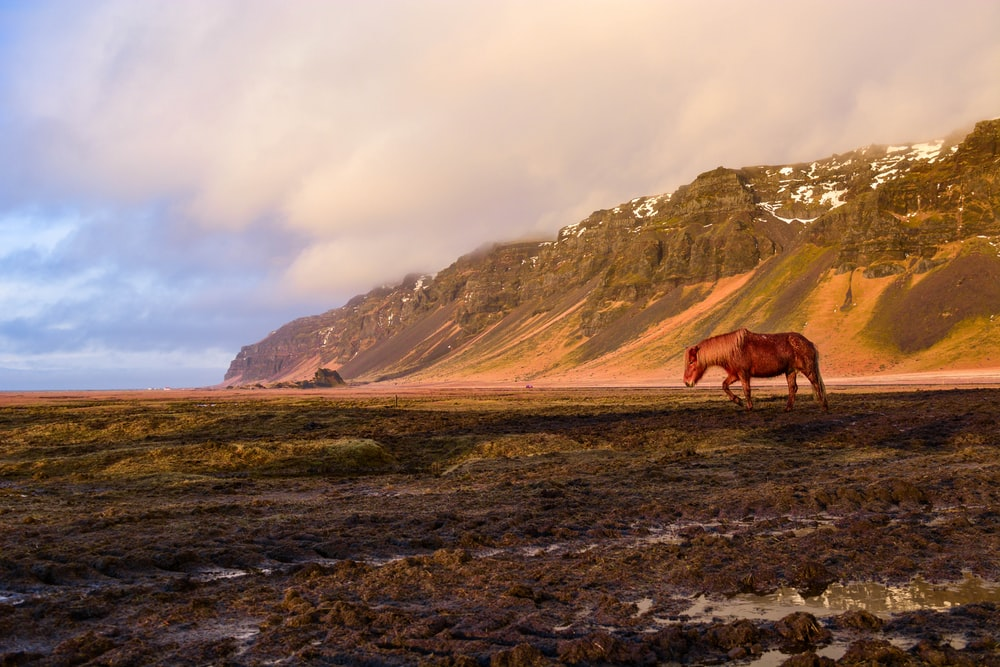 brown horse on green grass field near mountain during daytime