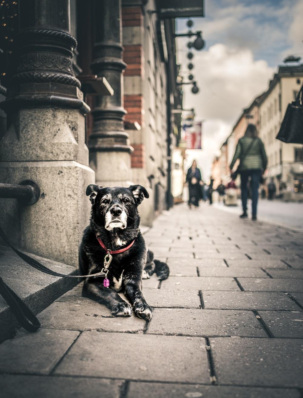 black short coated dog sitting on gray concrete brick floor during daytime