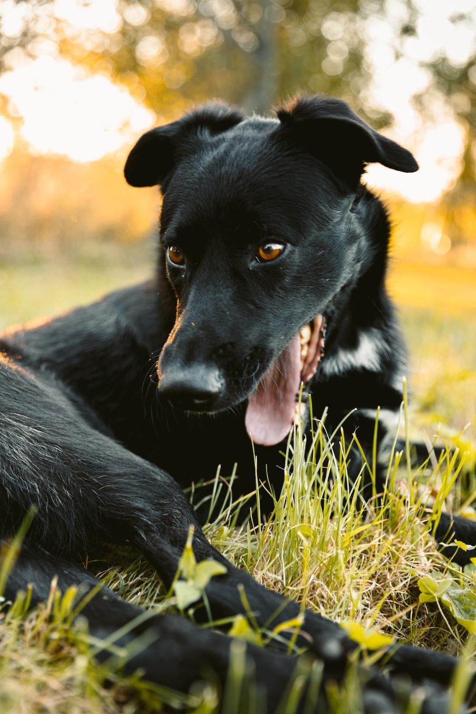 black short coat medium dog on green grass during daytime