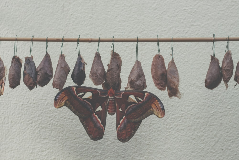 brown and red wooden fish wall decor