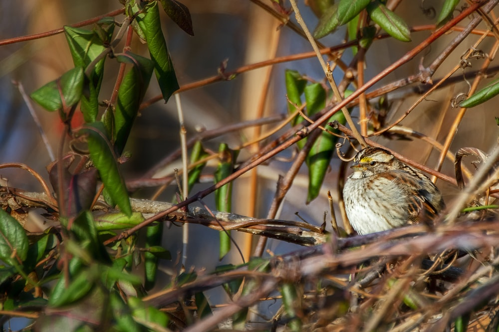 white and brown bird on green plant