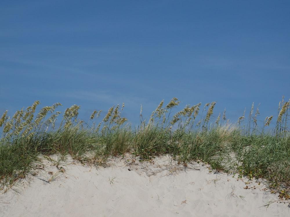 green grass on white sand during daytime