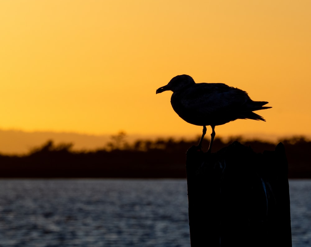 silhouette of bird on wooden post during sunset