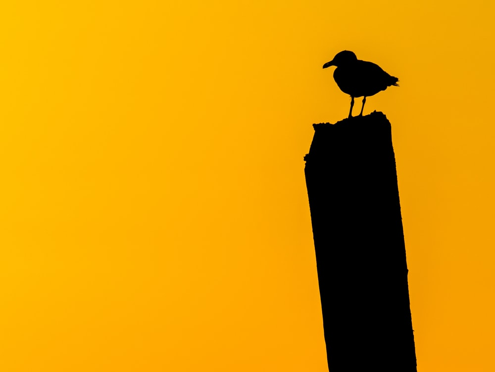 silhouette of bird on top of a post