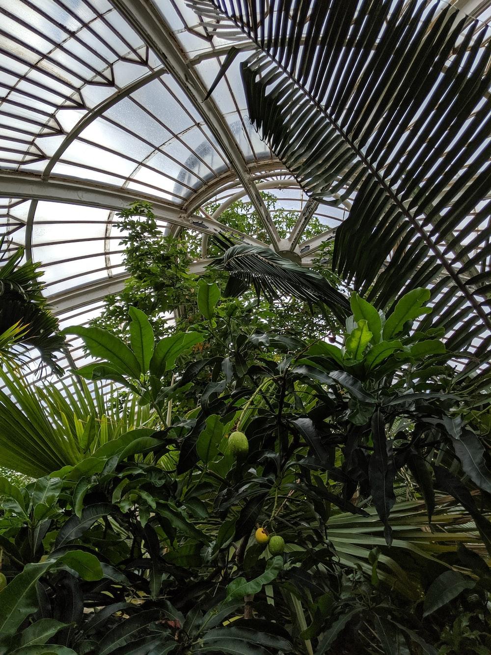green leaf plant inside greenhouse