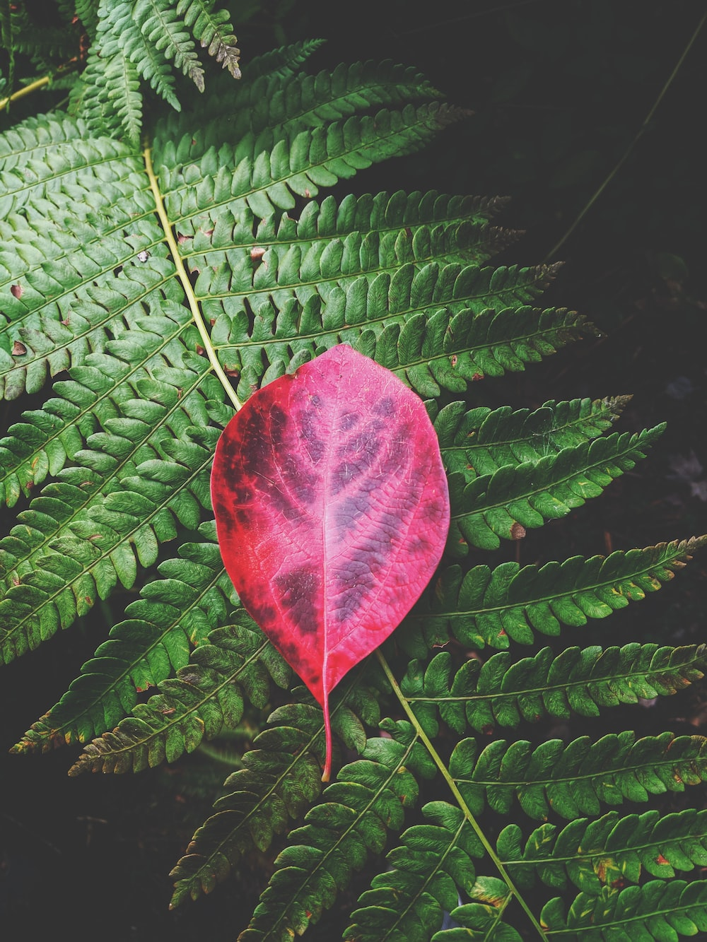 red leaf on green leaves