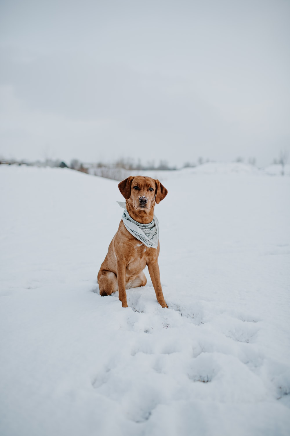 brown short coated dog sitting on snow covered ground during daytime