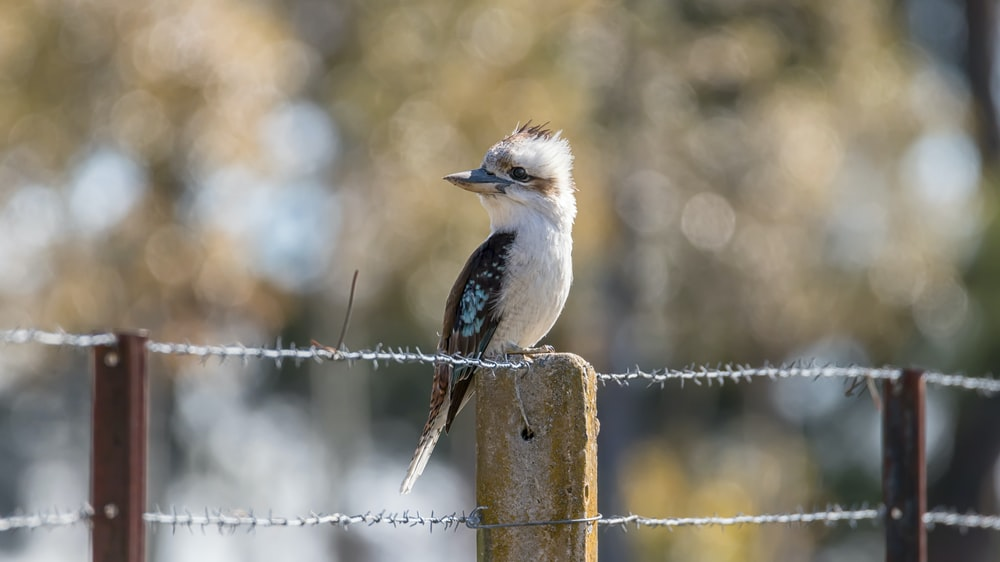white and black bird on brown wooden fence during daytime