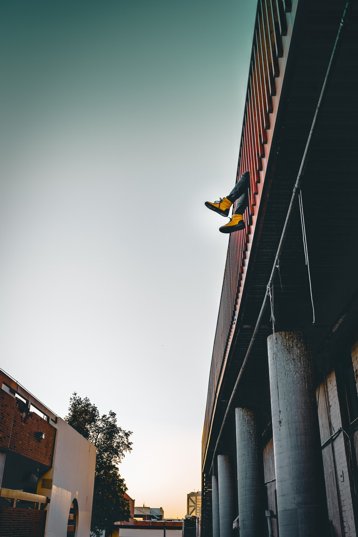 black and yellow bird on black metal post during daytime