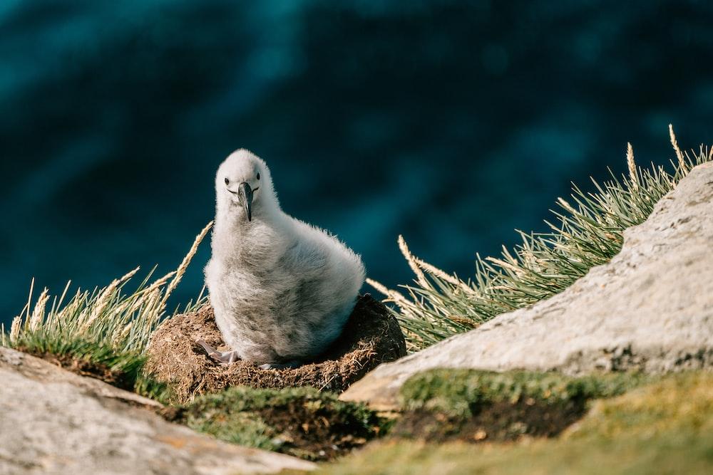 white bird on gray rock