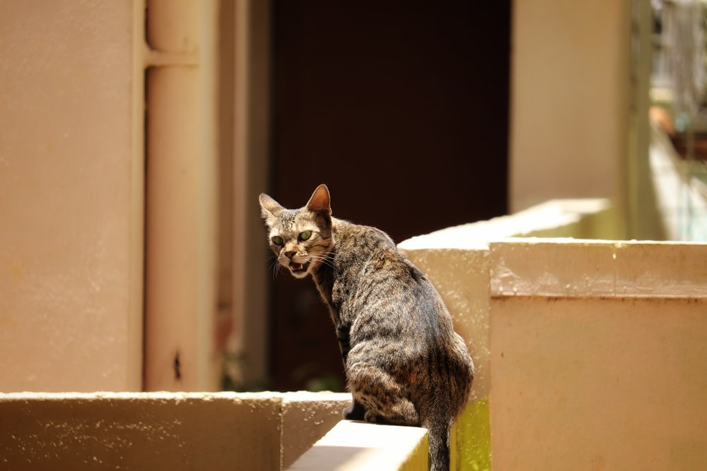 brown tabby cat on white concrete wall