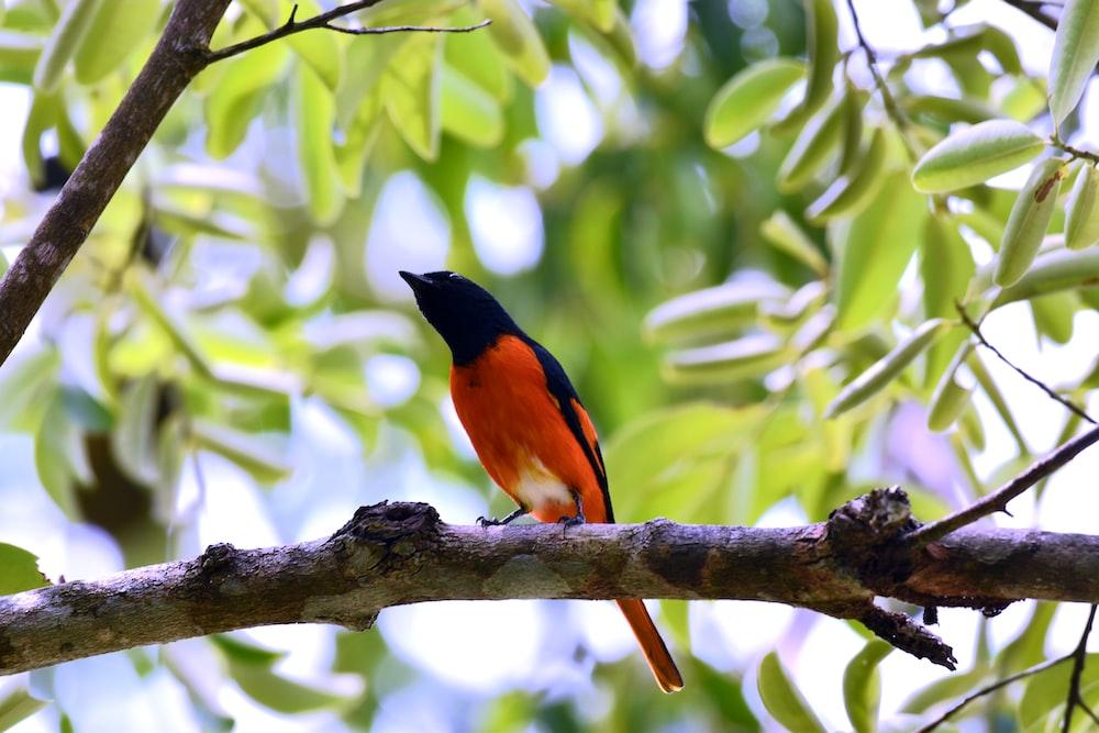 black and orange bird on tree branch during daytime