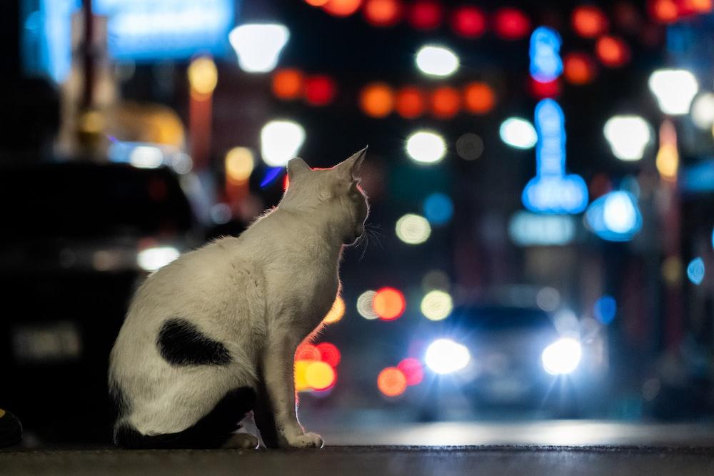 white cat on gray concrete floor