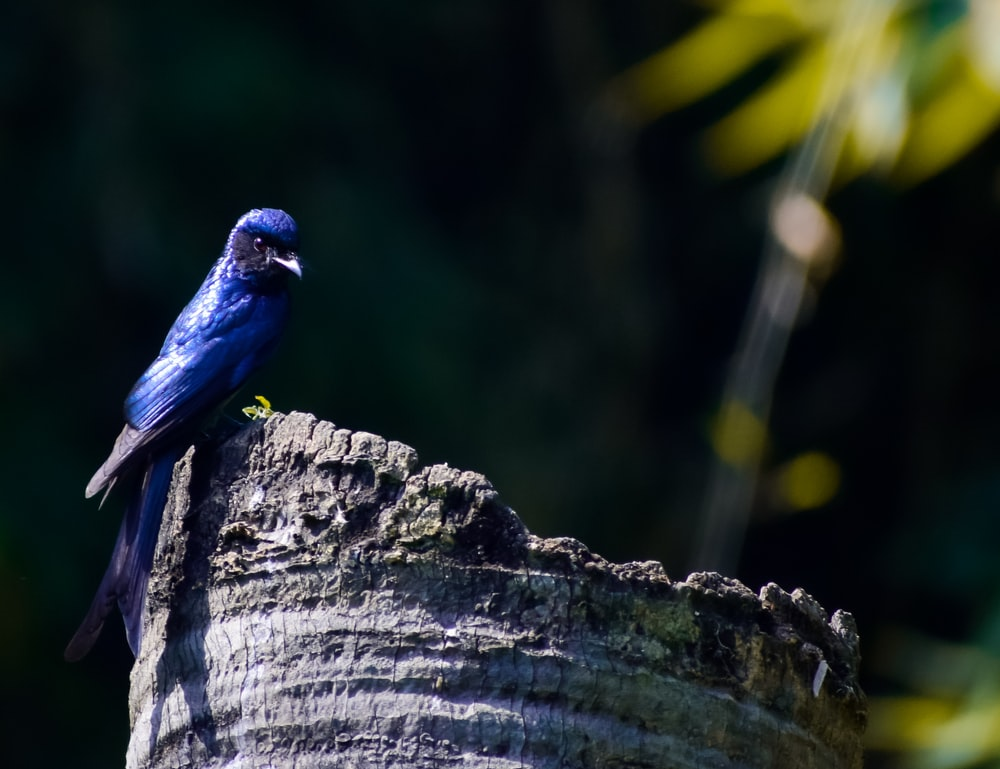 blue bird on brown tree trunk