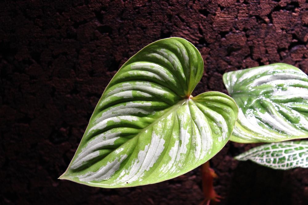 green leaf plant on brown soil