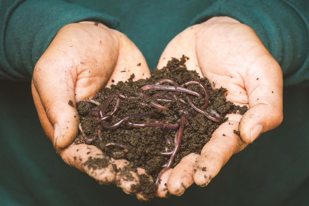 brown dried leaves on persons hand
