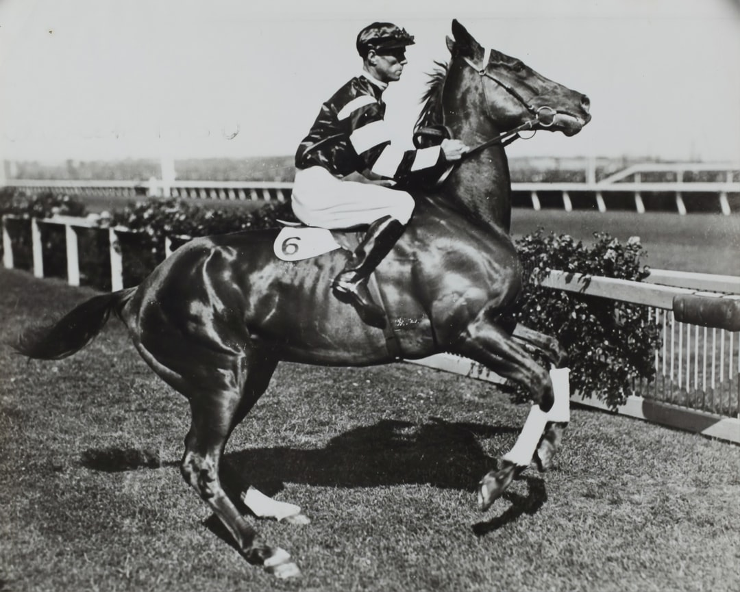 1930. Jockey Jim Pike is pictured riding Phar Lap during the Melbourne Cup Carnival. Flemington race track is shown in the background. Pike wears a silk top that has white stripes on the arms. He wears a dark helmet and white jodpurs. Phar Lap's white saddle cloth bears the number 6, which is the number he wore during the Melbourne Stakes, the main race on Derby Day (the first Saturday of the carnival.)