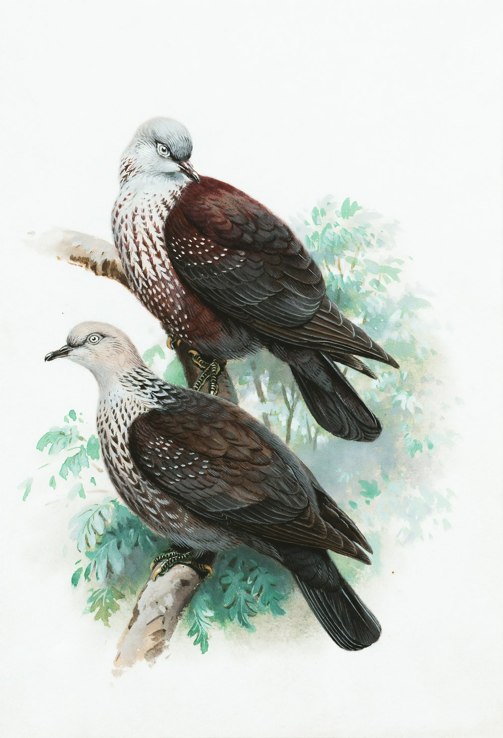 brown and white bird painting