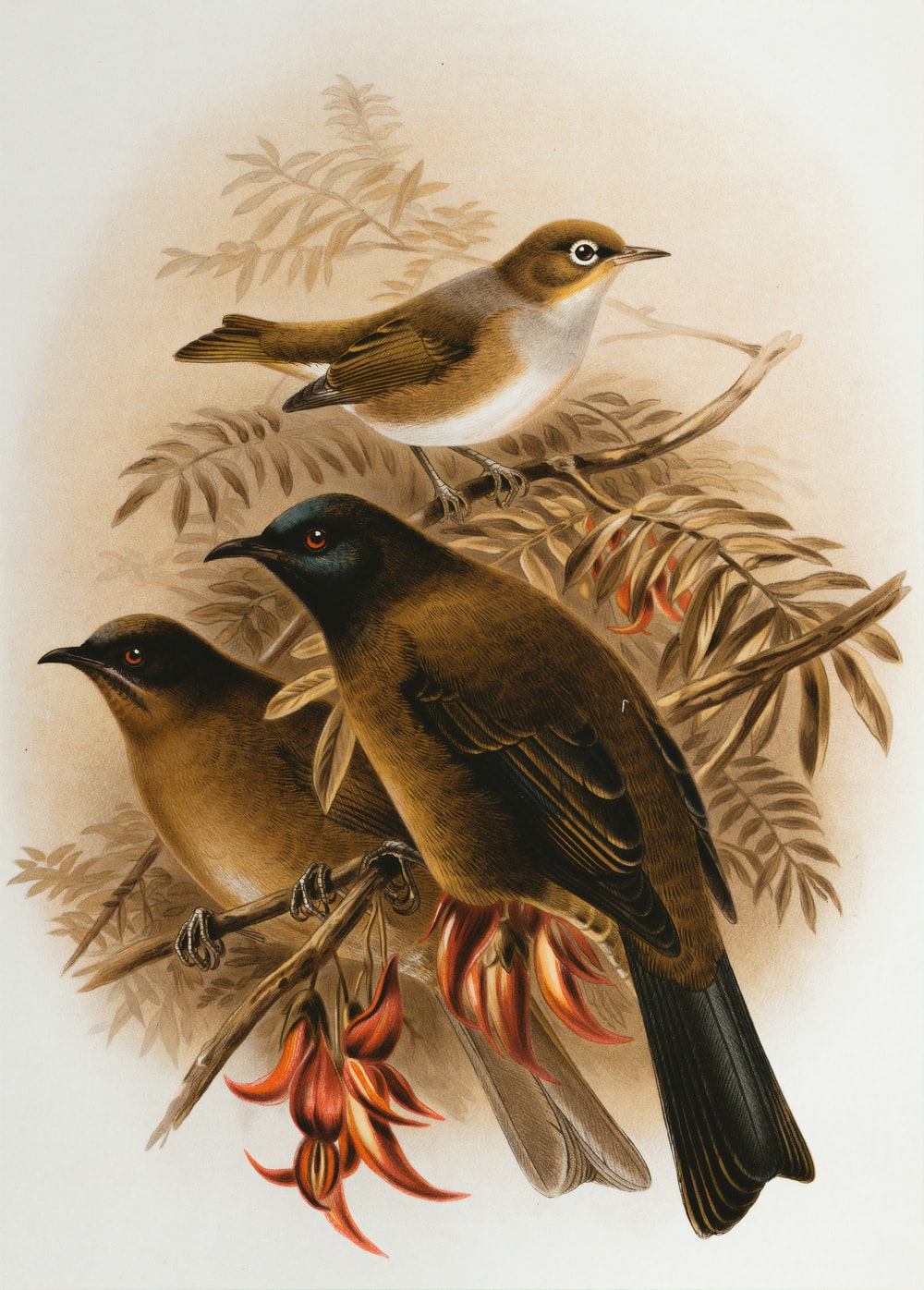 brown and black bird painting