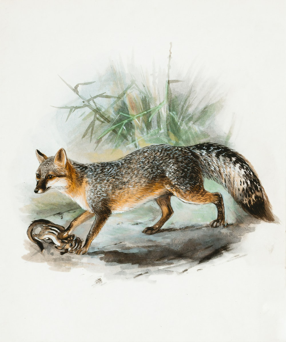 brown fox lying on snow covered ground