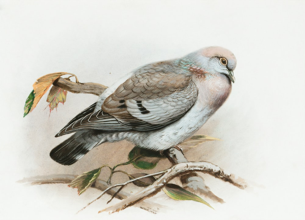 gray and brown bird on tree branch