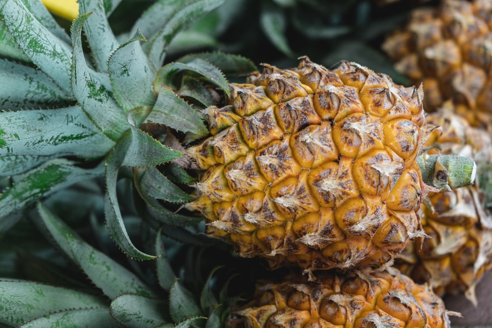 yellow and green pineapple fruit