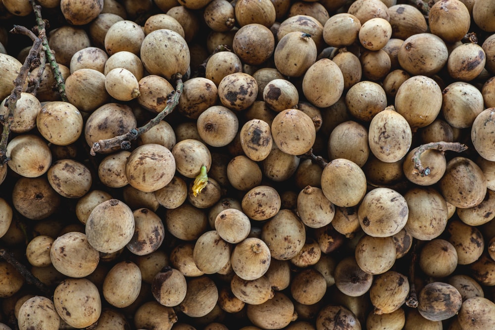 brown and black round fruits