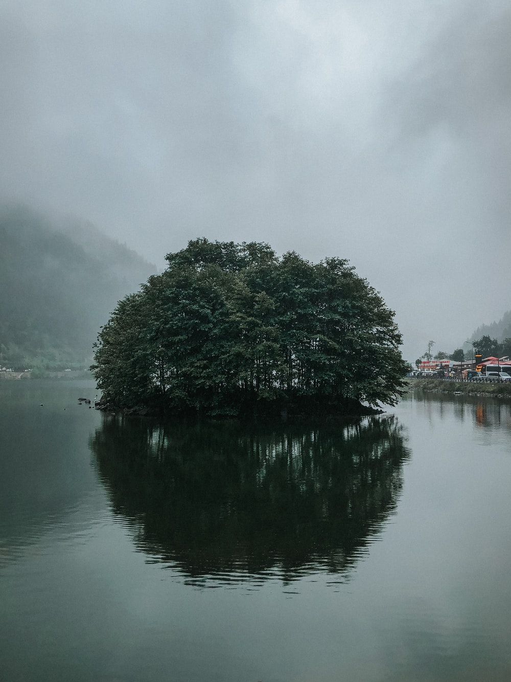 green trees near body of water under cloudy sky during daytime
