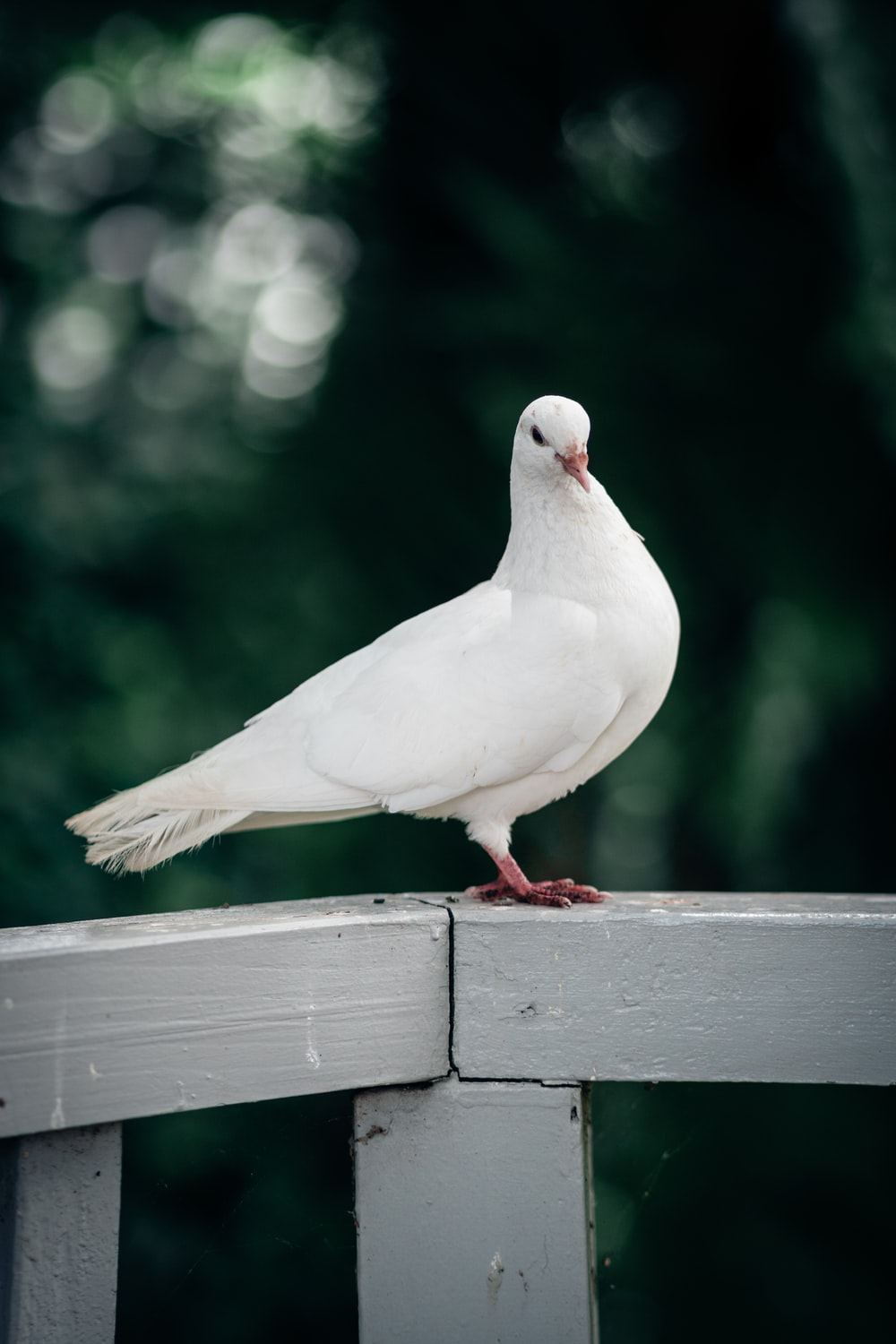 white bird on brown wooden fence during daytime