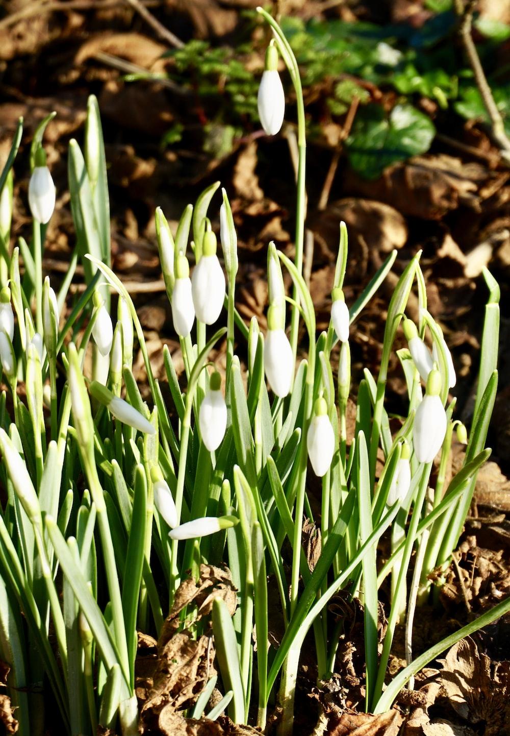 white flowers on brown soil