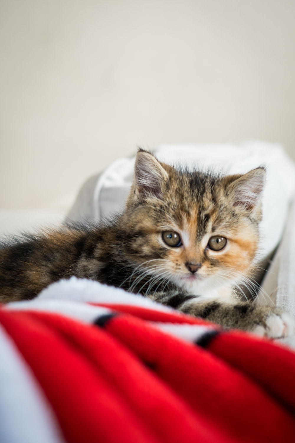 brown tabby cat on white and red textile