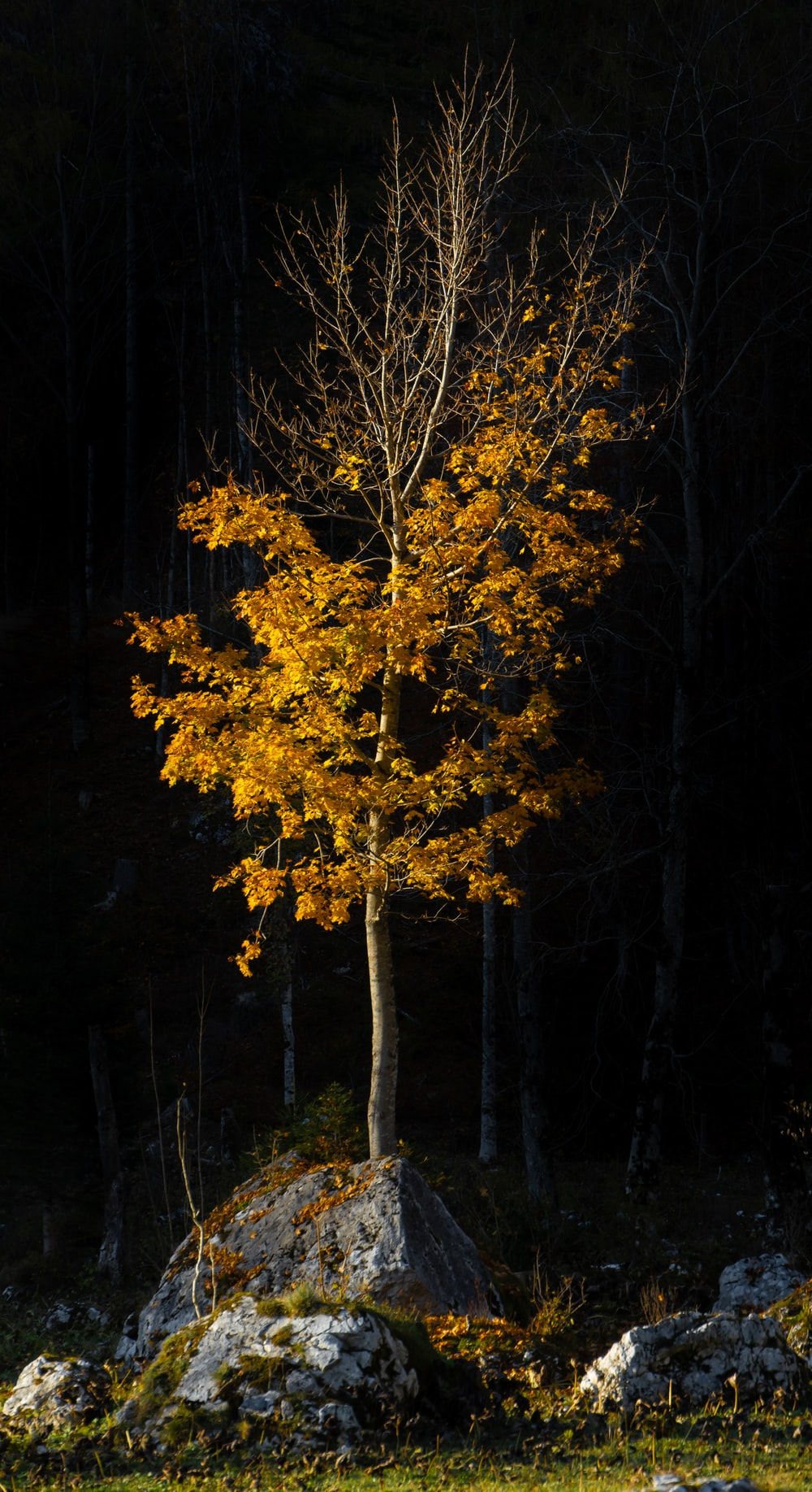 yellow leaf tree in forest during daytime