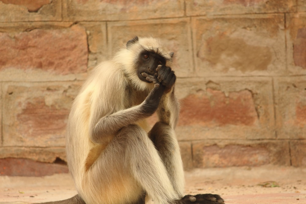 brown monkey sitting on brown concrete wall during daytime