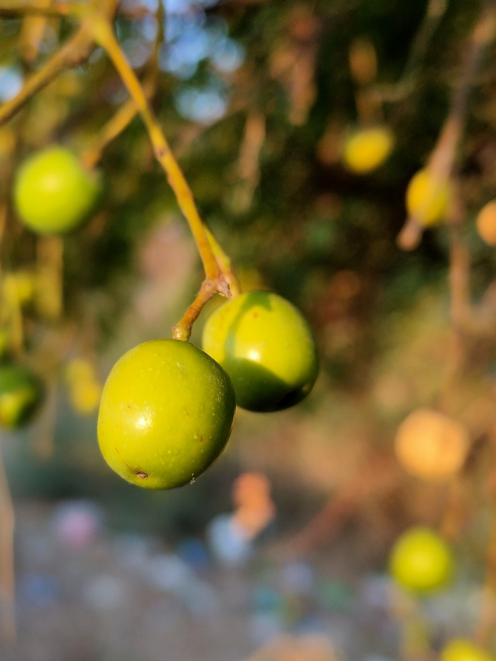 green round fruit in close up photography