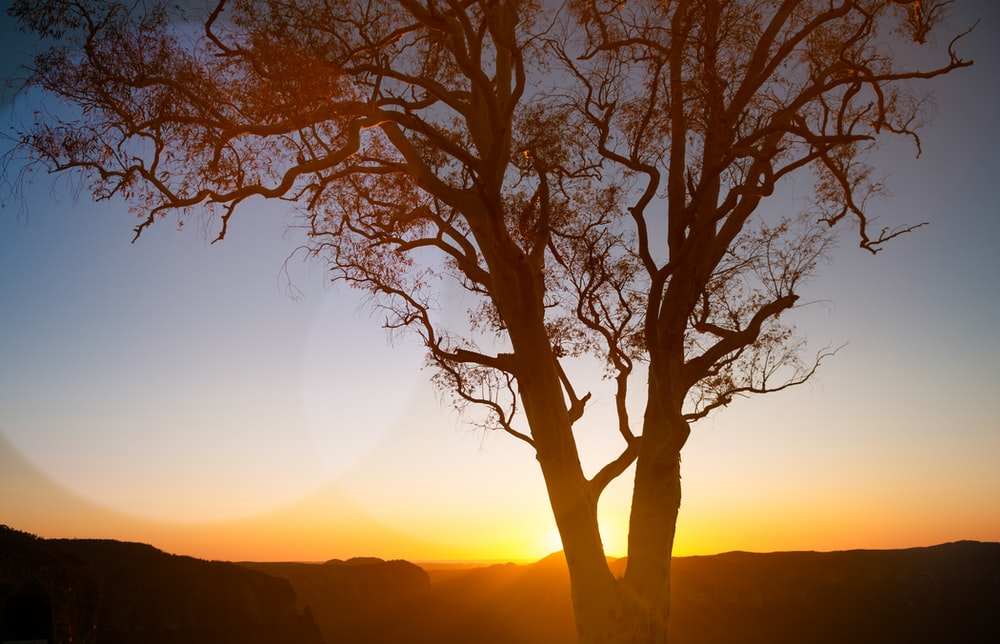 leafless tree on hill during sunset