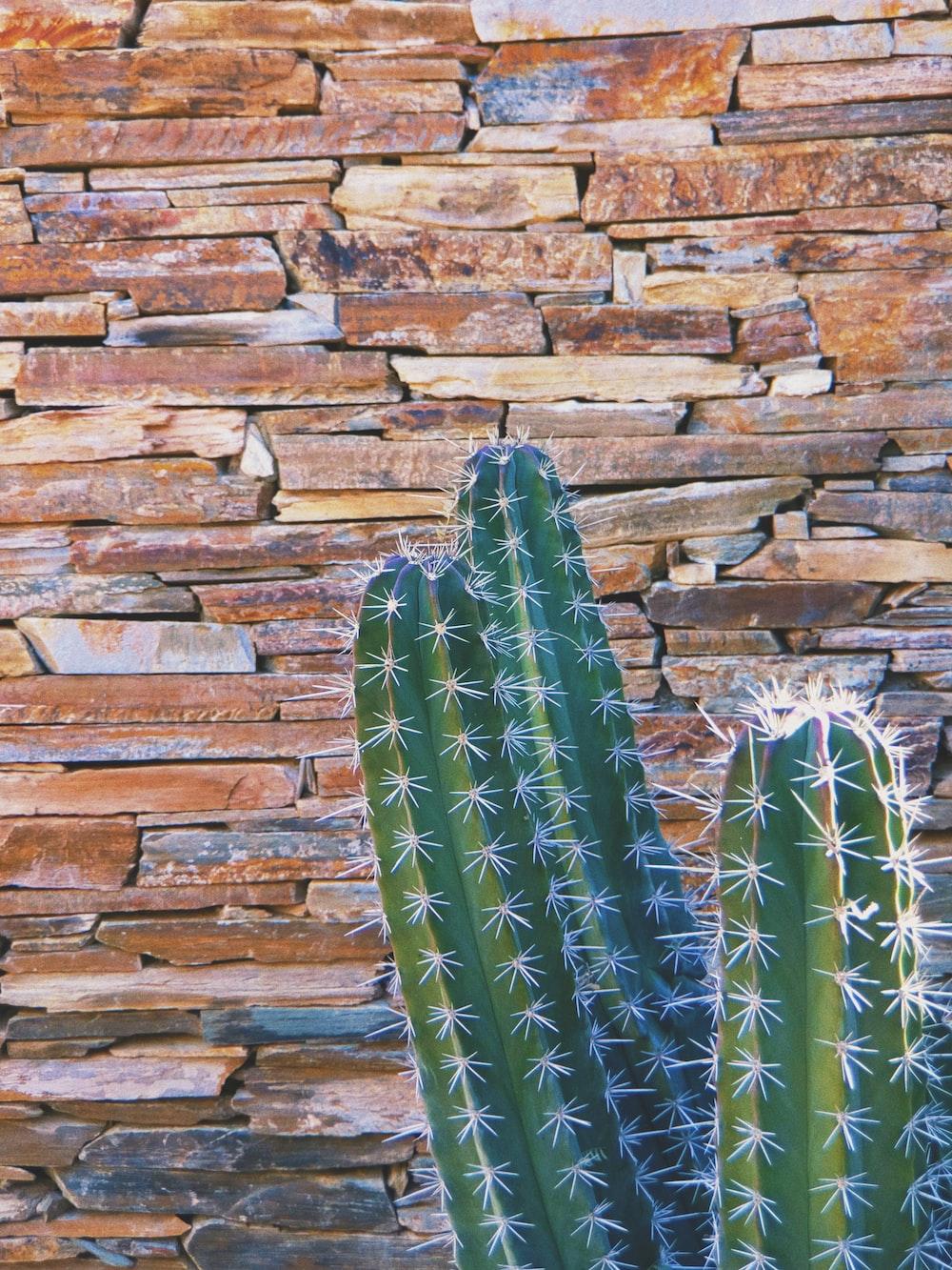 green cactus on brown brick wall