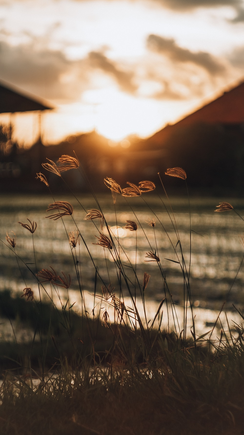 brown grass during golden hour