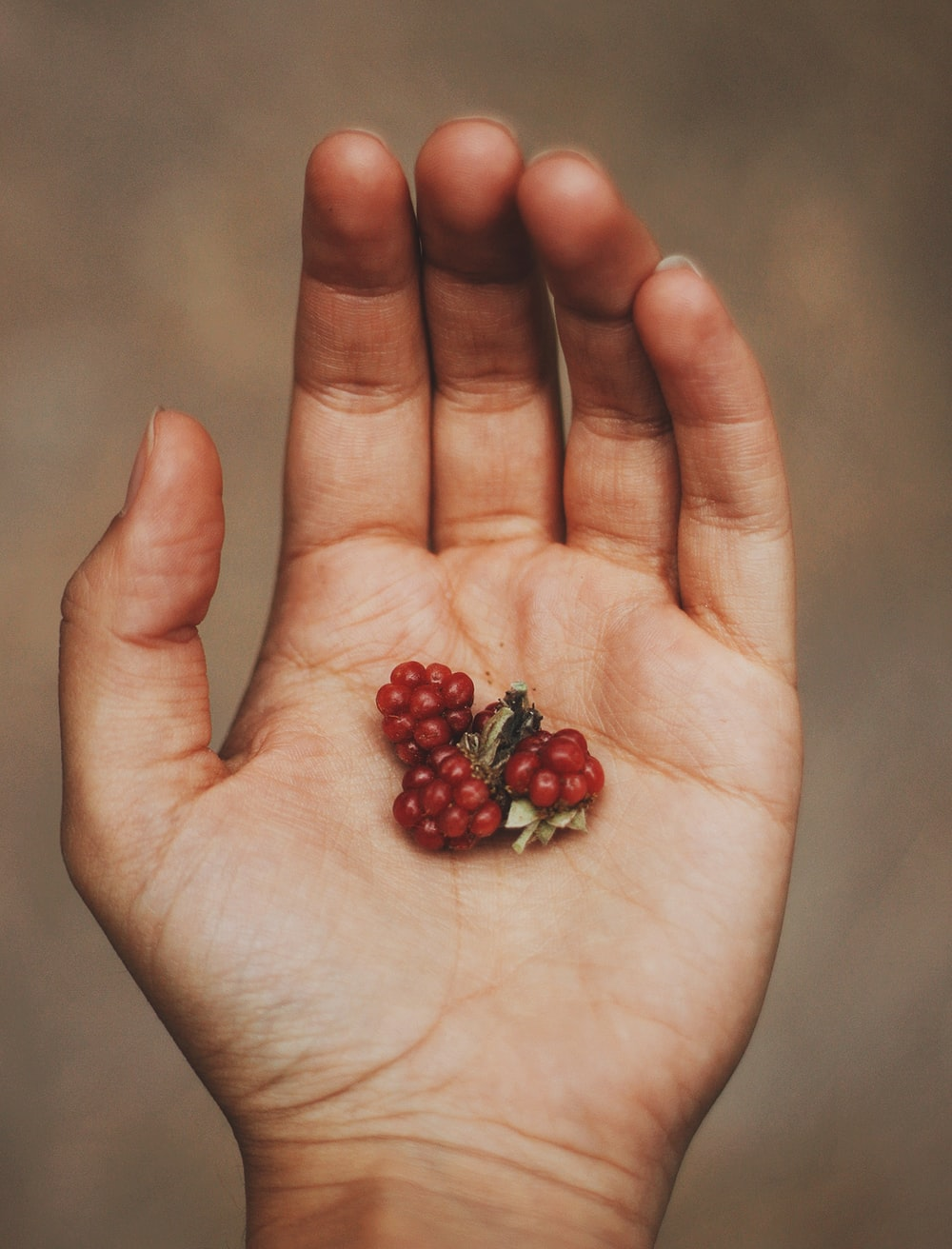 red round fruits on persons palm