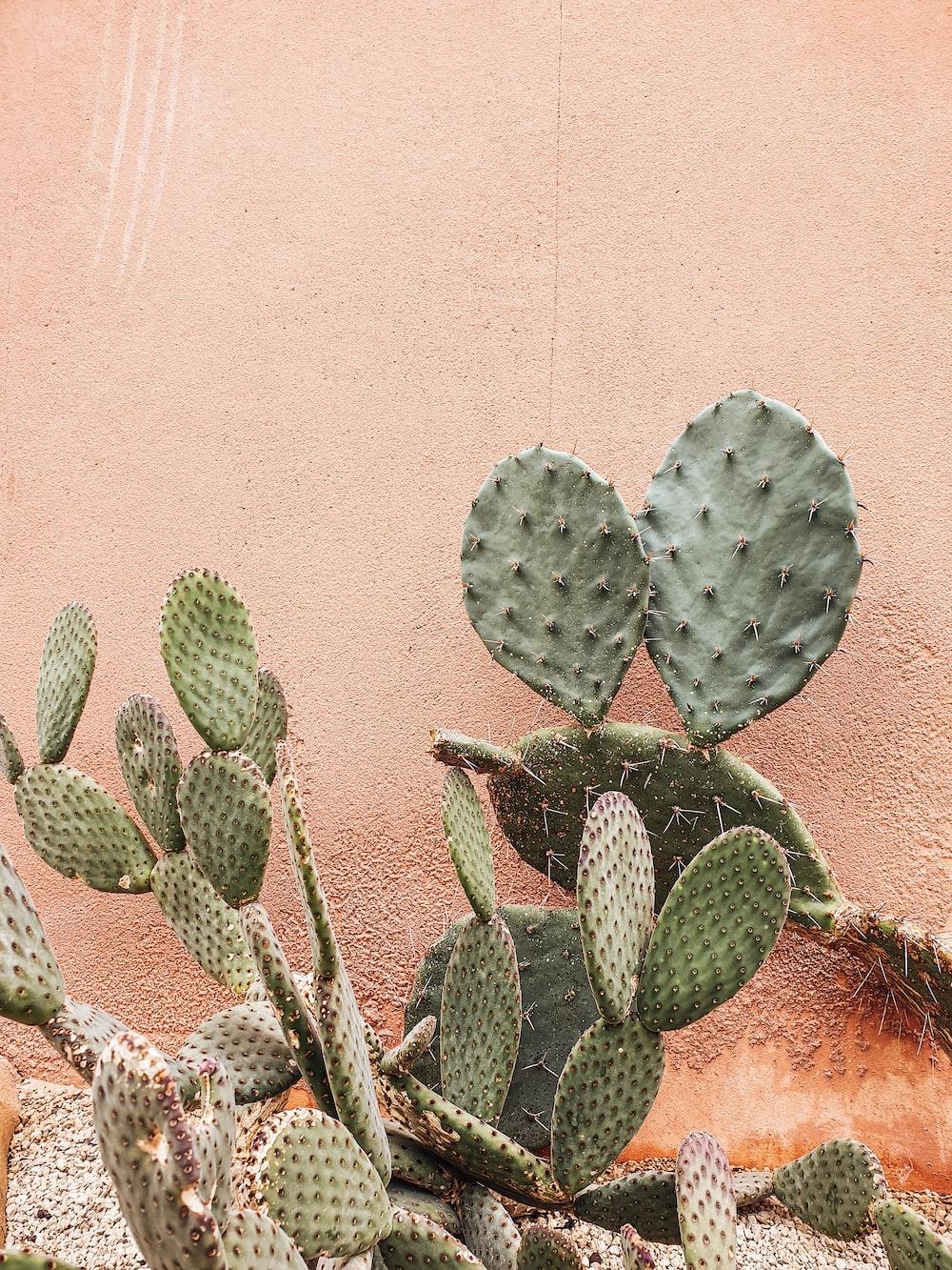green cactus plant near brown wall