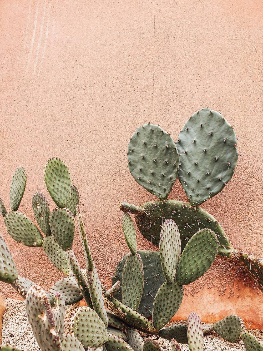green cactus plant near brown wall