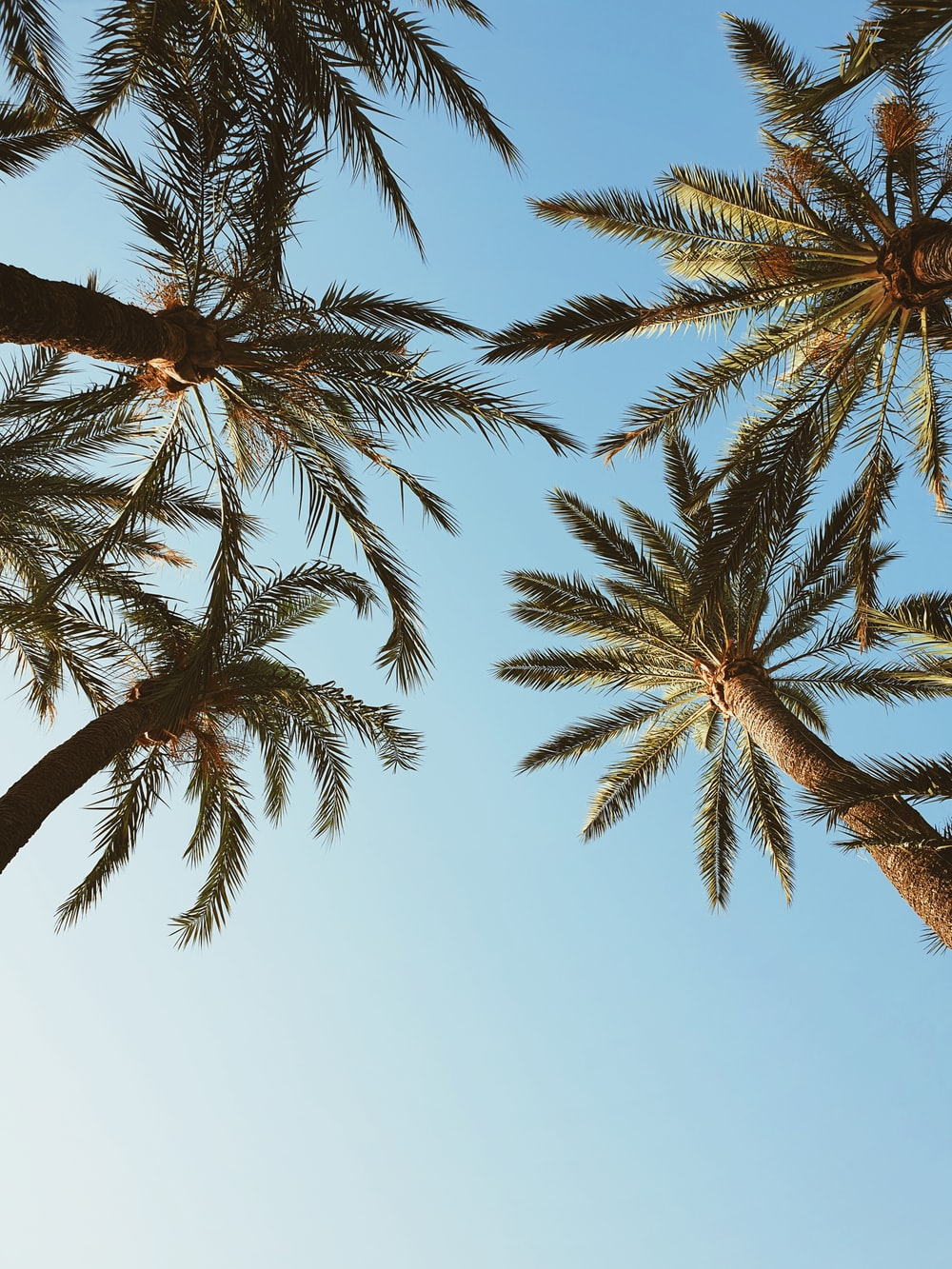 green and brown palm tree under blue sky during daytime
