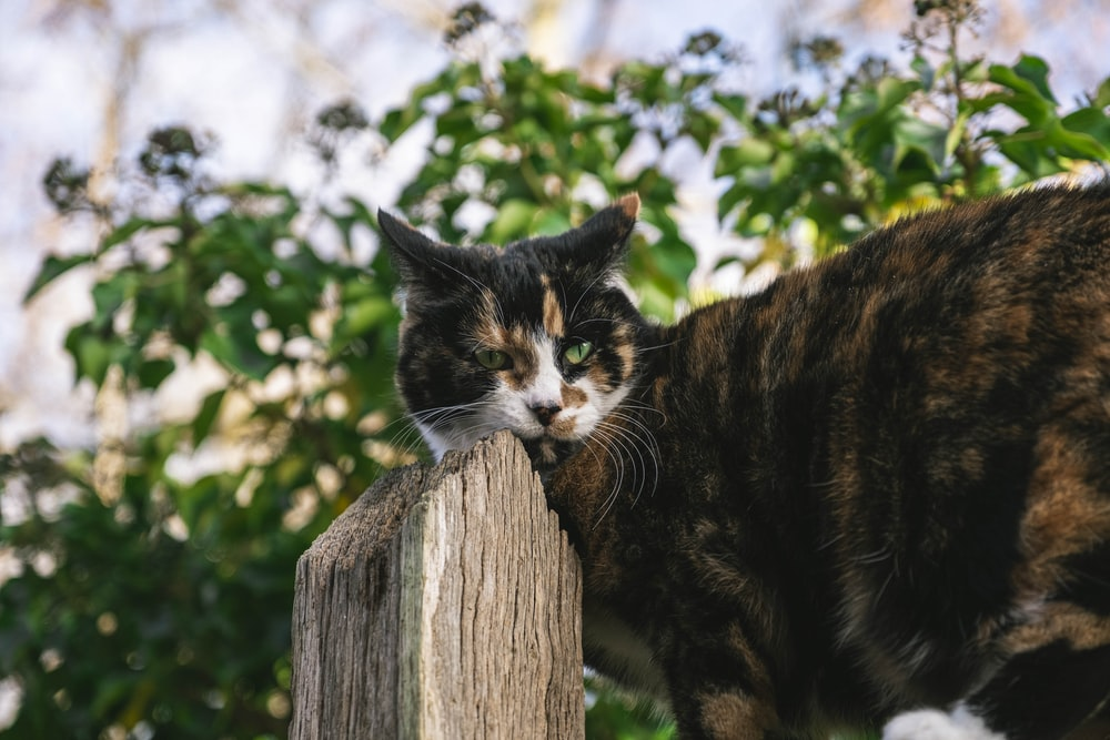 black and brown cat on brown wooden fence during daytime
