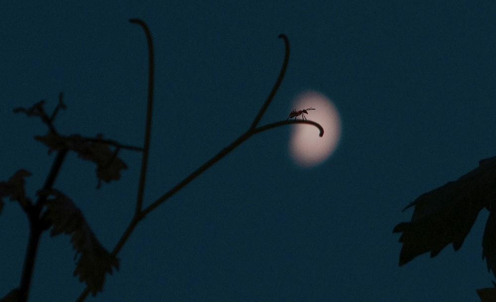 white moon on blue sky