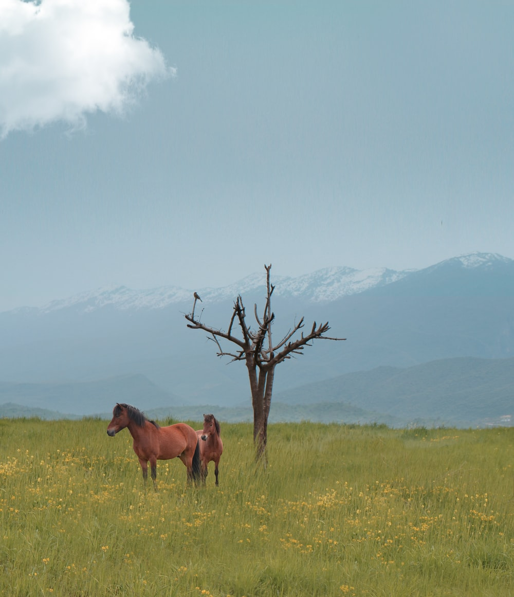 brown horse on green grass field during daytime