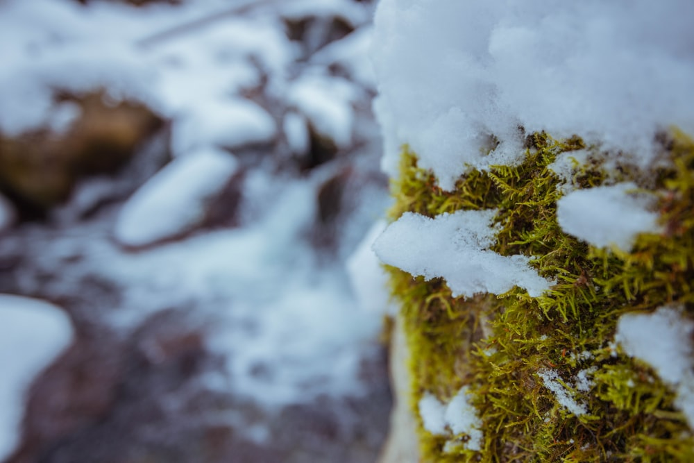 green moss on white snow