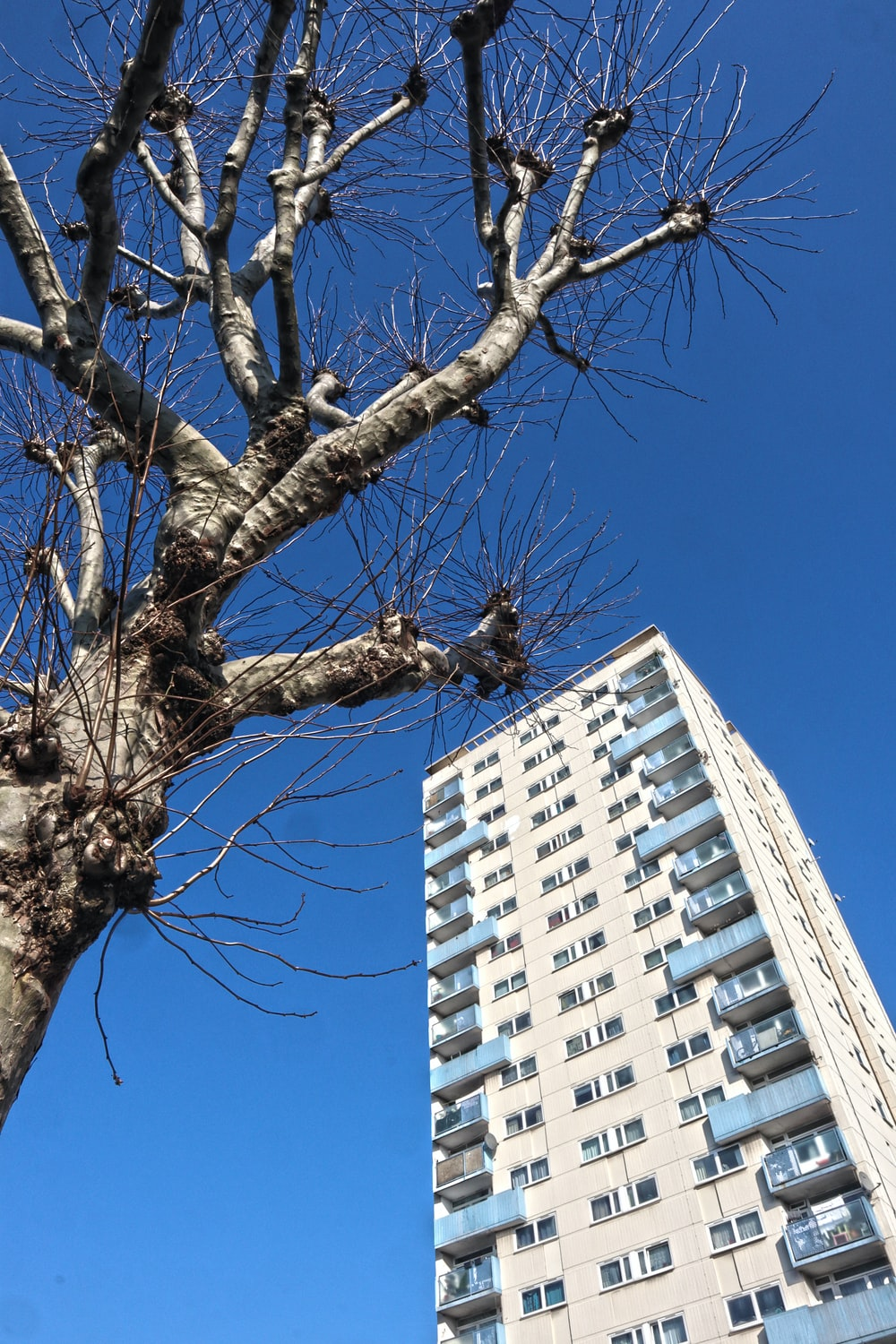bare tree near white concrete building during daytime