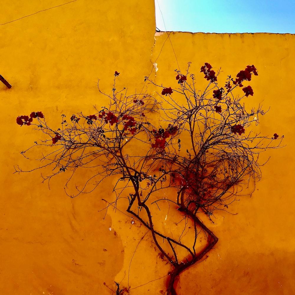 leafless tree beside yellow wall