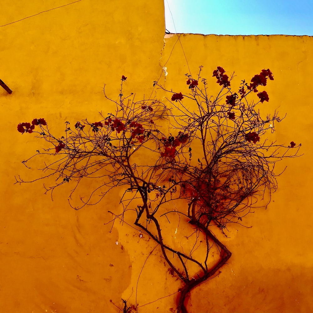 leafless tree beside yellow wall